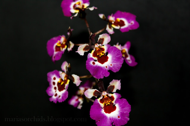 Purple Orchid Holidays Holy Land Tours