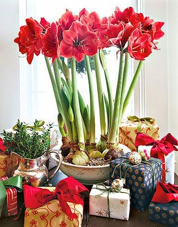 Tales of an interior stylist holiday home start your for Amaryllis christmas decoration