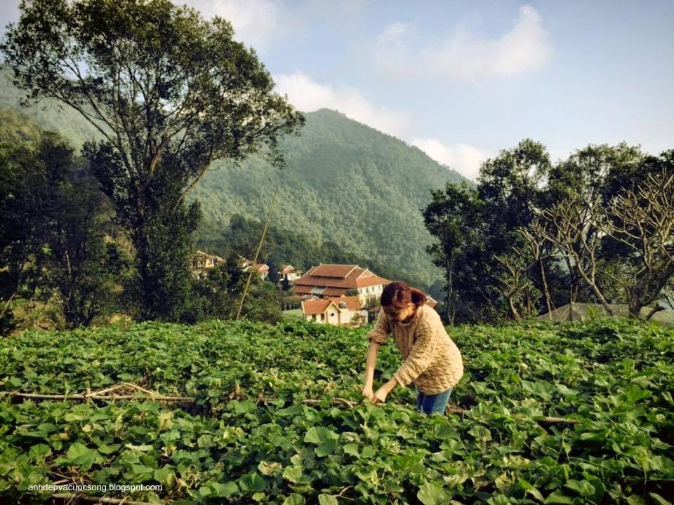 Ca sĩ Hoàng Thùy Linh nô đùa bên vườn rau 10