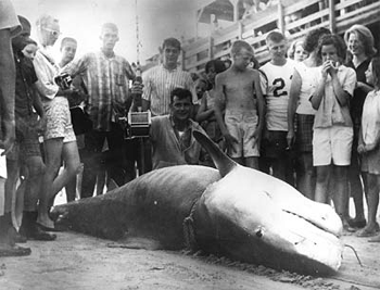 Walter Maxwell's world record tiger shark