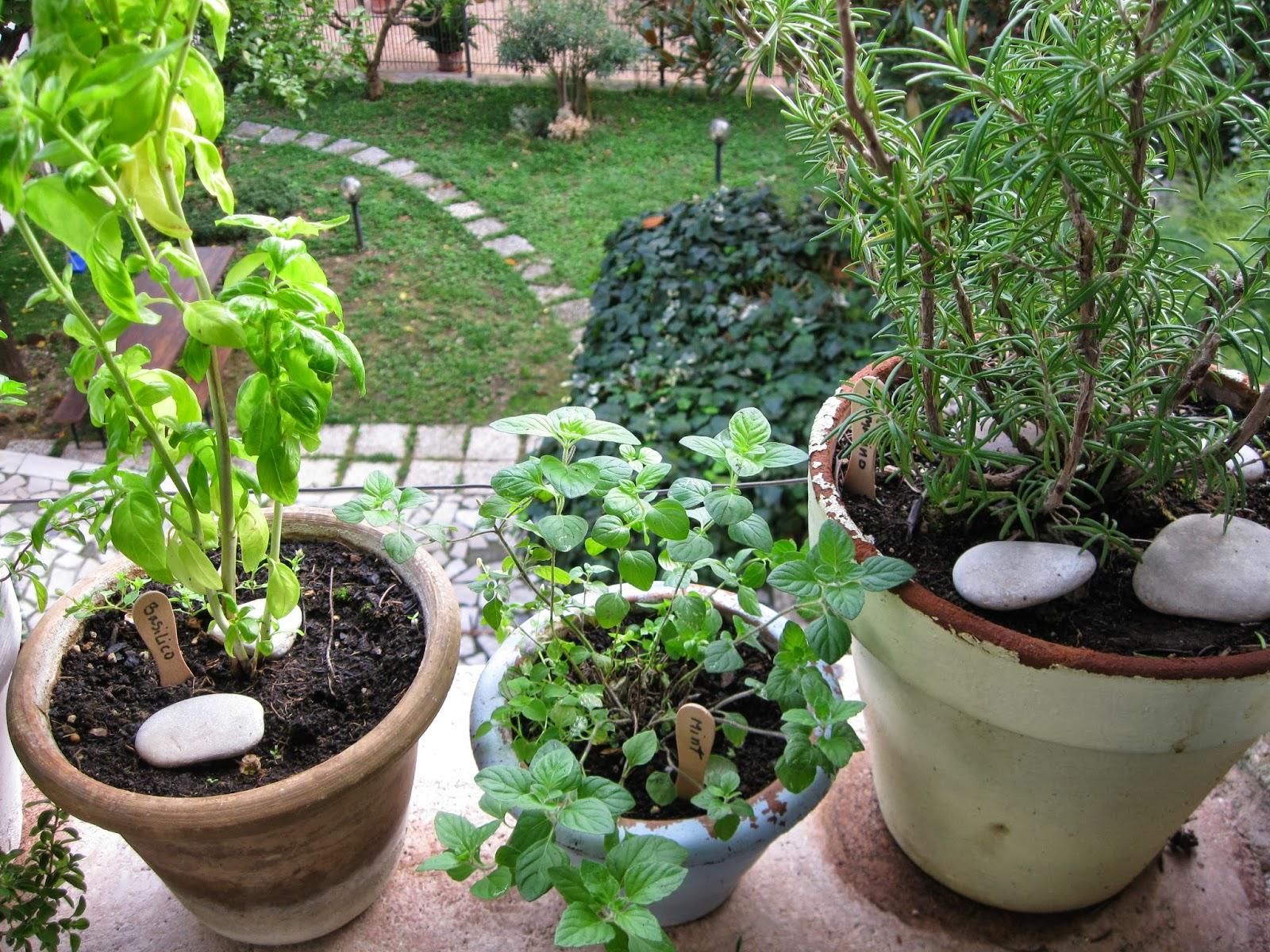 Sette design create a kitchen garden for Creating a kitchen garden