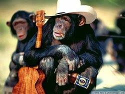 Chimp in cowboy hat