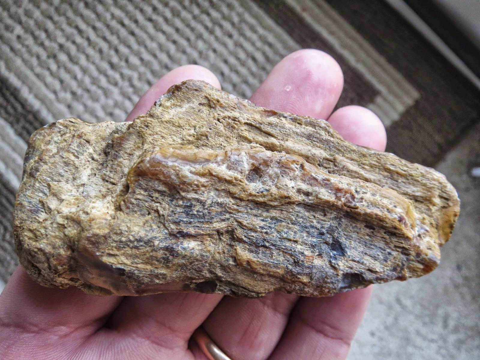 how to tell petrified wood from rock