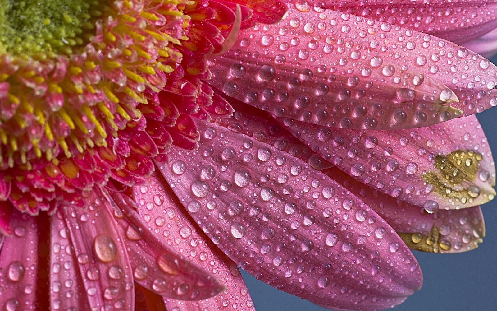 flower water drops - Angelic Hugs