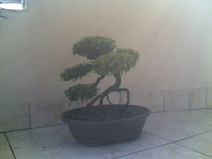 POHON BONSAI
