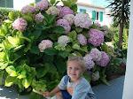La sonrisa de las hortensias