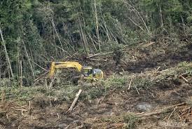 Pembukaan Areal Perkebunan Kelapa Sawit
