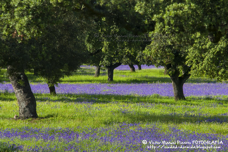 Fotos paisajes primaverales flores for Jardines de primavera