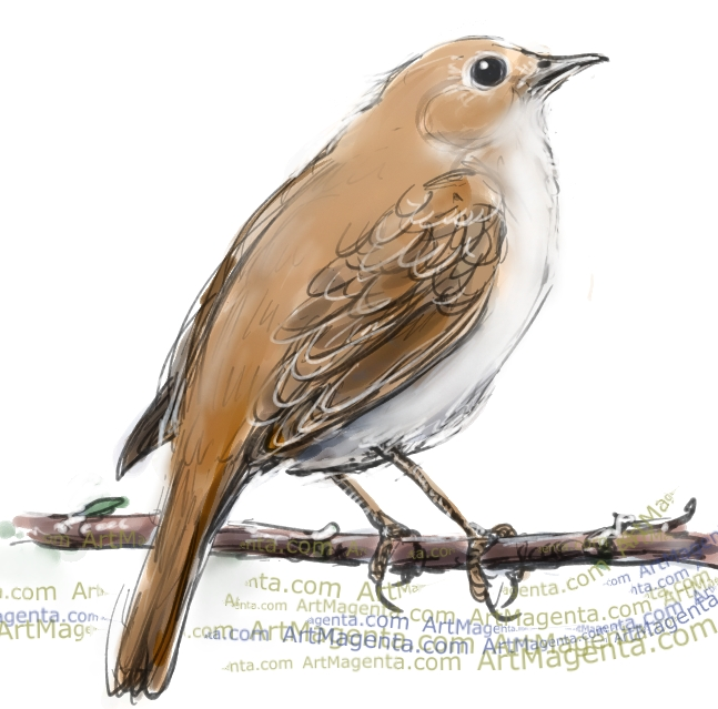 Nightingale sketch painting. Bird art drawing by illustrator Artmagenta
