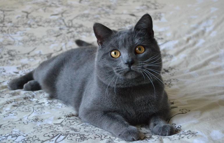 Verdi orizzonti il gatto for Il gatto inverno