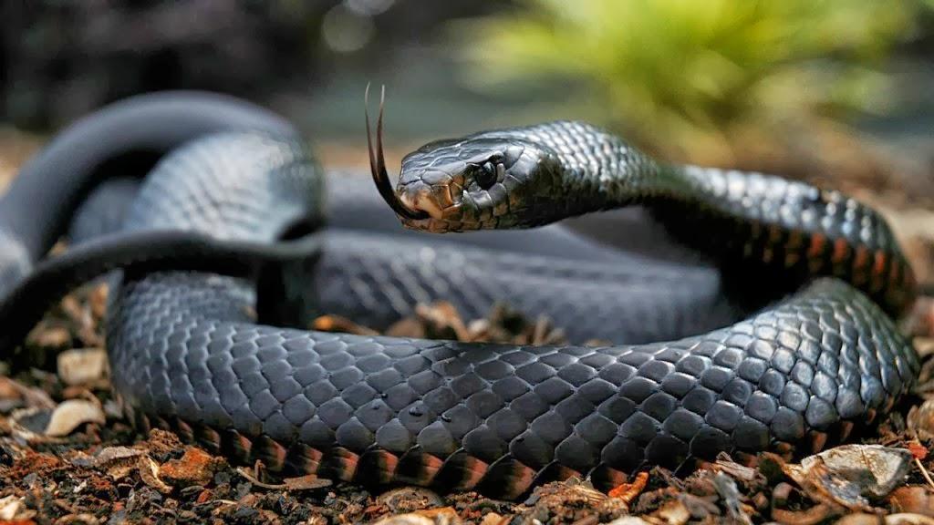 Las serpientes ms grandes del mundo fun video