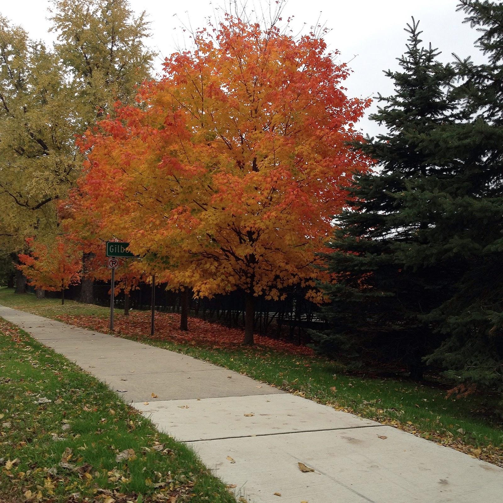Beautiful Pure Michigan Fall Colors Autumn Foliage