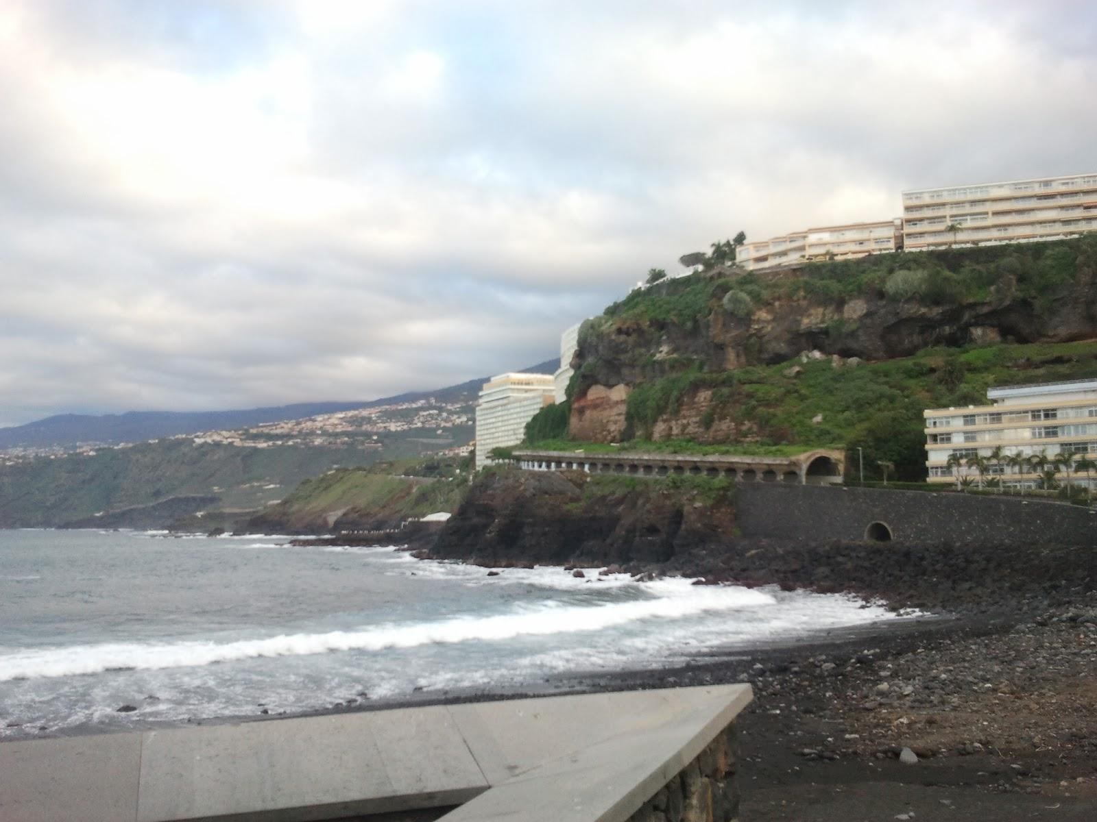 Kanaarilinnud ehk kaks varblast tenerifel veitsi vanapaar ja vana puu - Mcdonald s puerto de la cruz ...