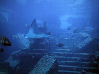 Foto-foto Seramnya Dalam Laut Segitiga Bermuda
