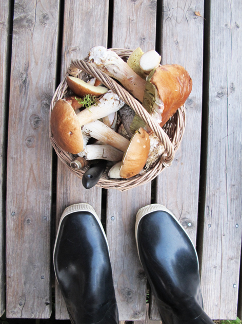 Rapujuhlat, landea ja sienipiirakkaa