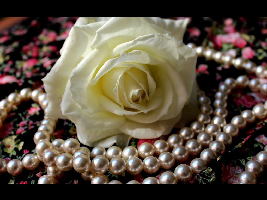 roses and pearls - photo #31