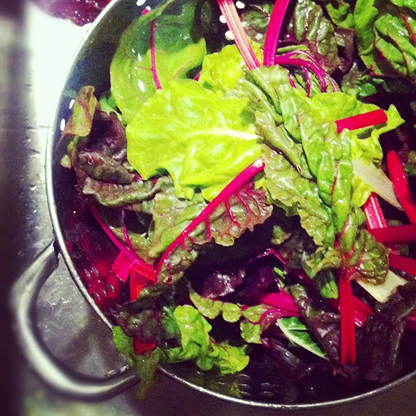 Orlando And The Fountain Marvellous Kale