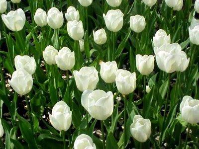 Flores Lindas #1