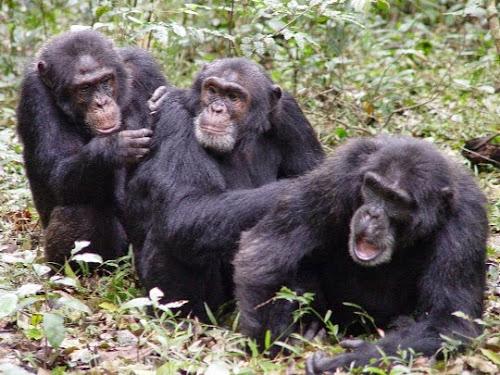 Os mitos que você pensava que era verdade do reino animal