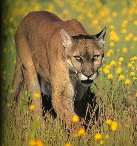 7art wild animals