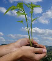 Contoh Laporan Pratikum Ekologi 1 Komponen Dan Struktur Ekosistem Di Hutan