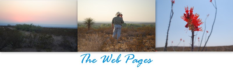 THE WEB PAGES