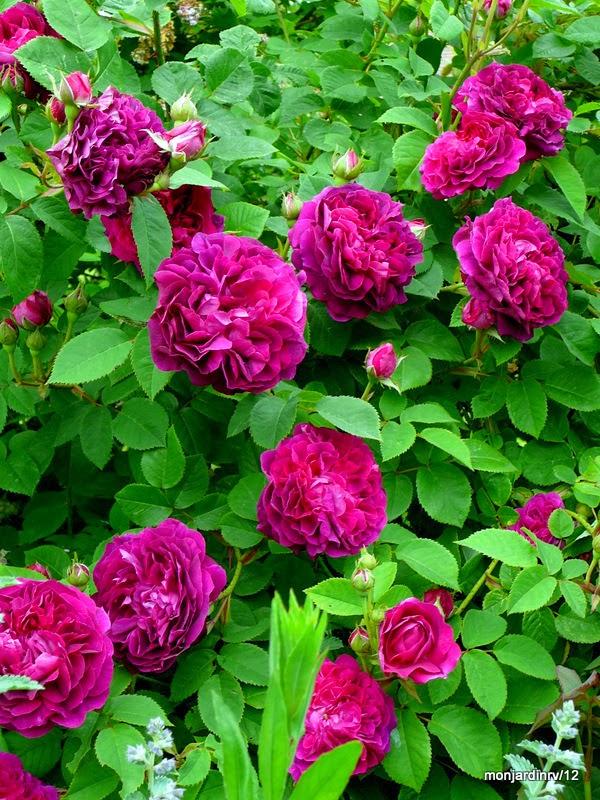 Derri re les murs de mon jardin d cembre 2013 - Derriere les murs de mon jardin ...