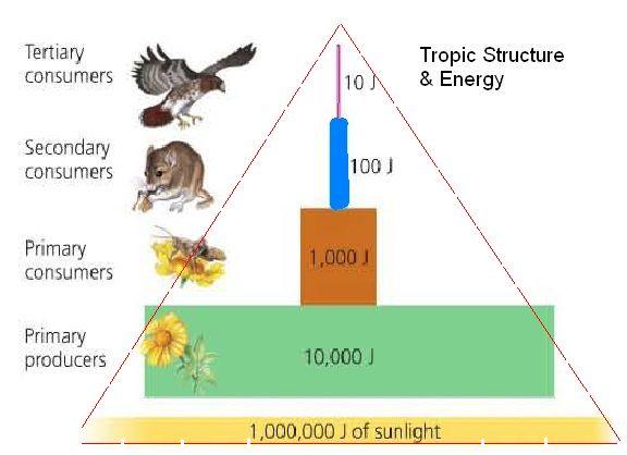 [Image: pyramid.jpg]