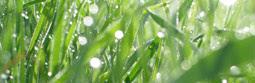 Hestel Tellus - Grass Compost ! Tutorial