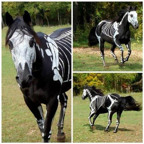 حصان اسود مخيف ومدهش