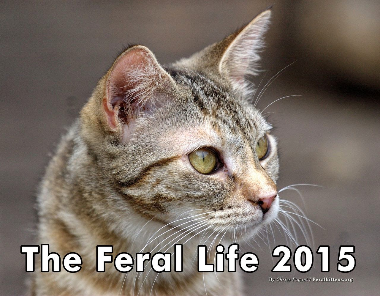 The Feral Life 2015