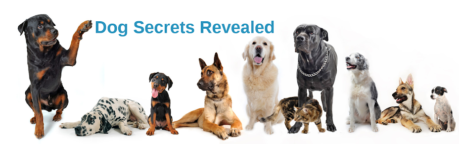 Dog Secrets Revealed