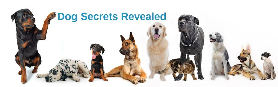 Dog Secrets Revealed