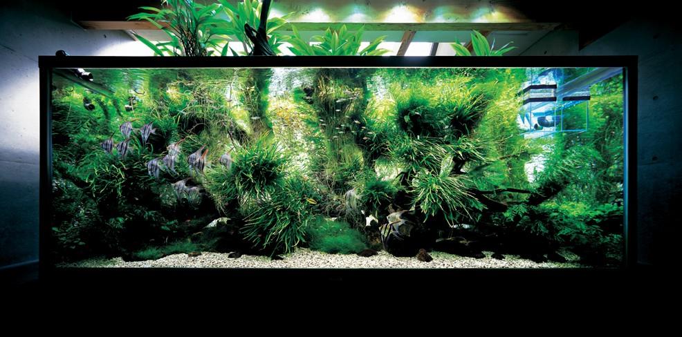 Aquascaping Amano : rikarium: Livre: Aquascaping, loeuvre complete de Takashi Amano