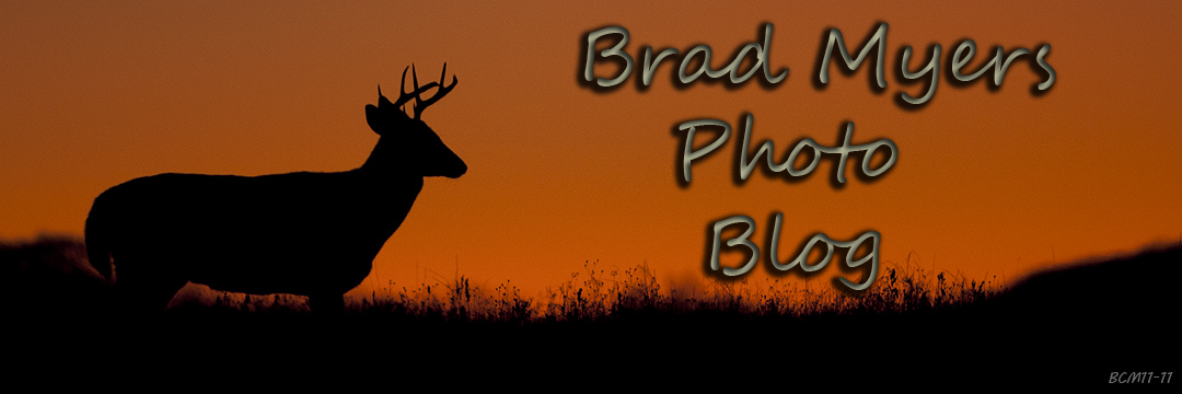 Bradley Myers Photo Blog