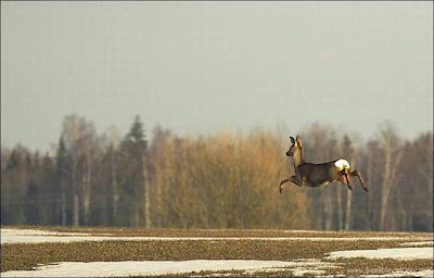 funny_picture_animal_jump