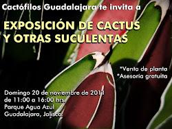 EXPOSICIÓN DE CACTUS Y OTRAS PLANTAS SUCULENTAS
