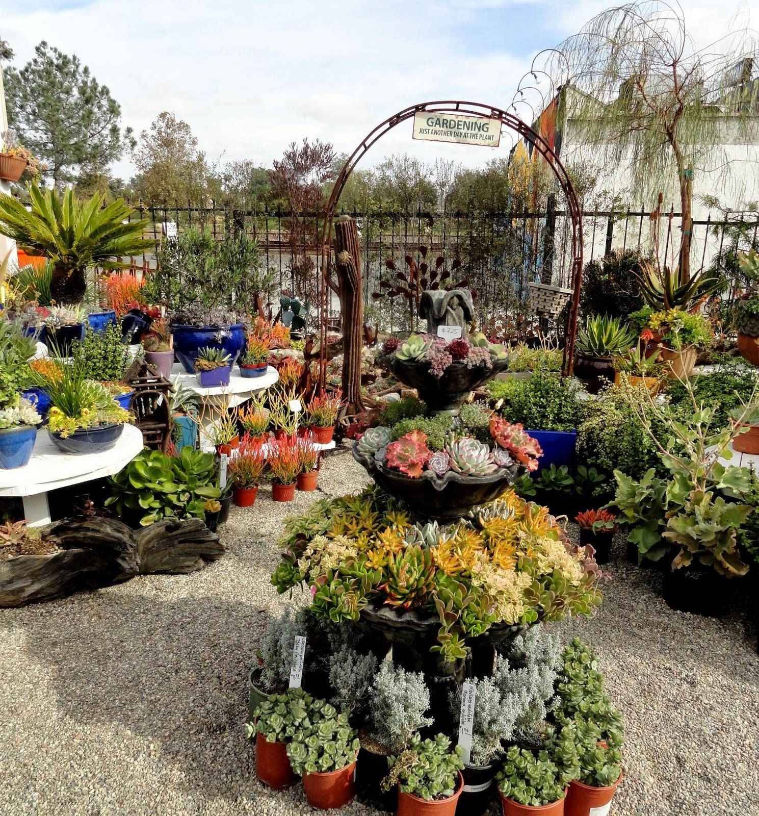 danger garden: Gardens by the Sea, another nursery visit