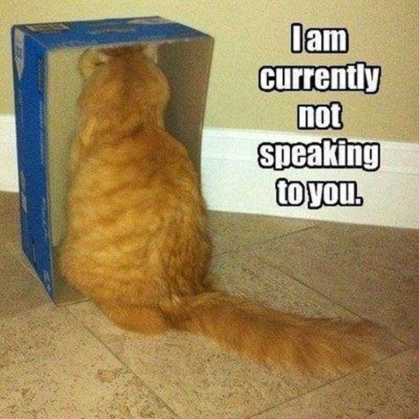Not Funny Cat Meme : Funny animal captions part pics amazing