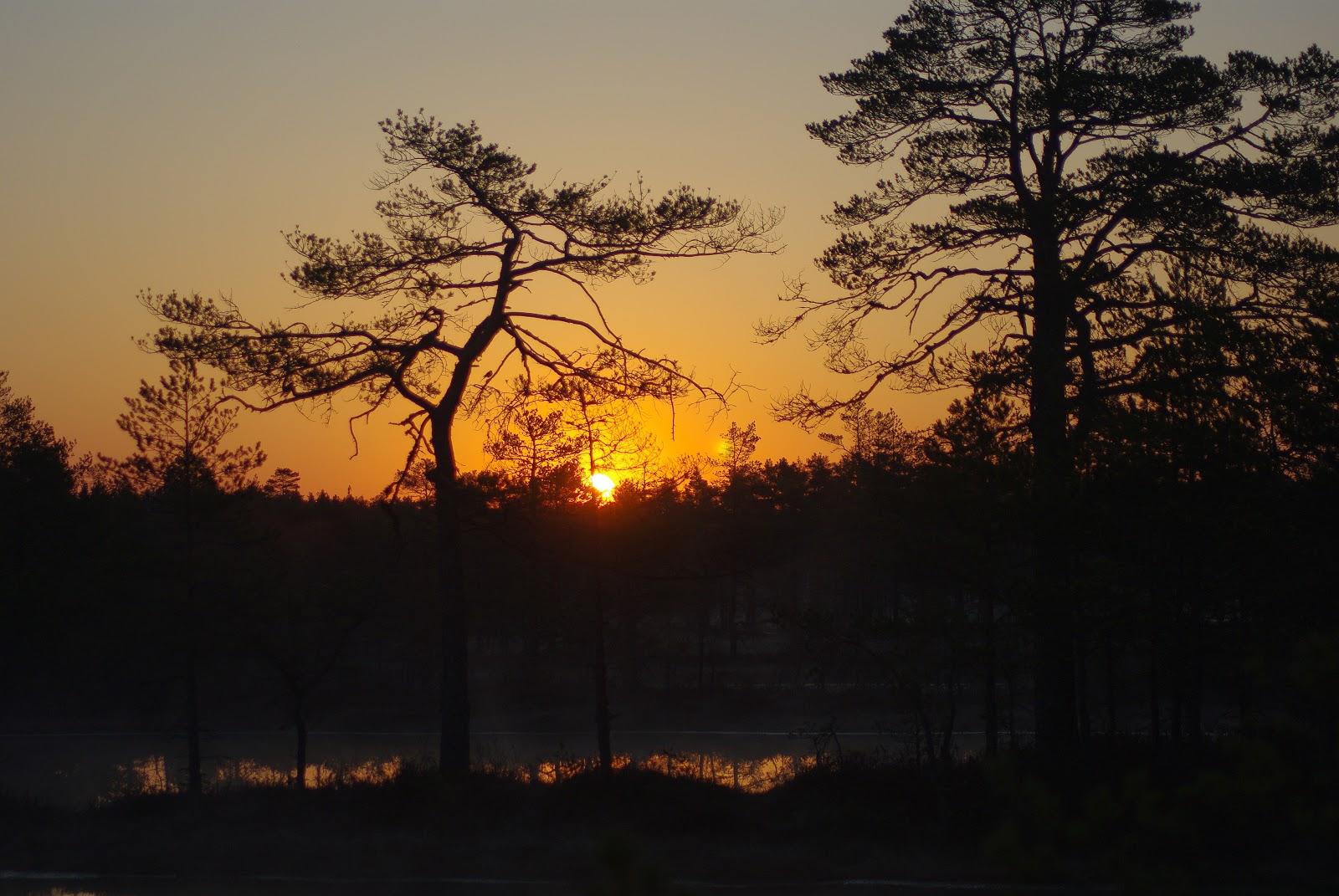 Viru raba õpperada päikesetõus Kalev Vask