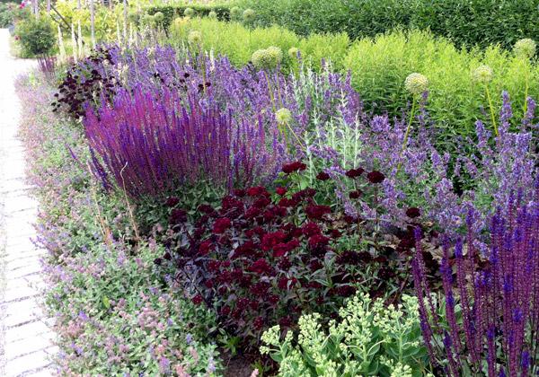 Rabatt med blommor i purpur och lila.