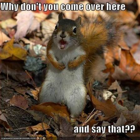 Come Here Squirrel Meme