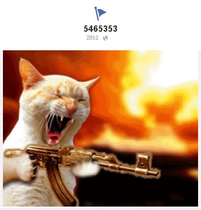 Cat Shooting Machine Gun
