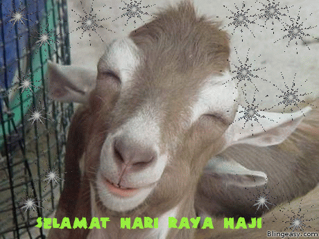 hari raya aidiladha, hari raya korban, hari raya haji, kambing korban, hari raya