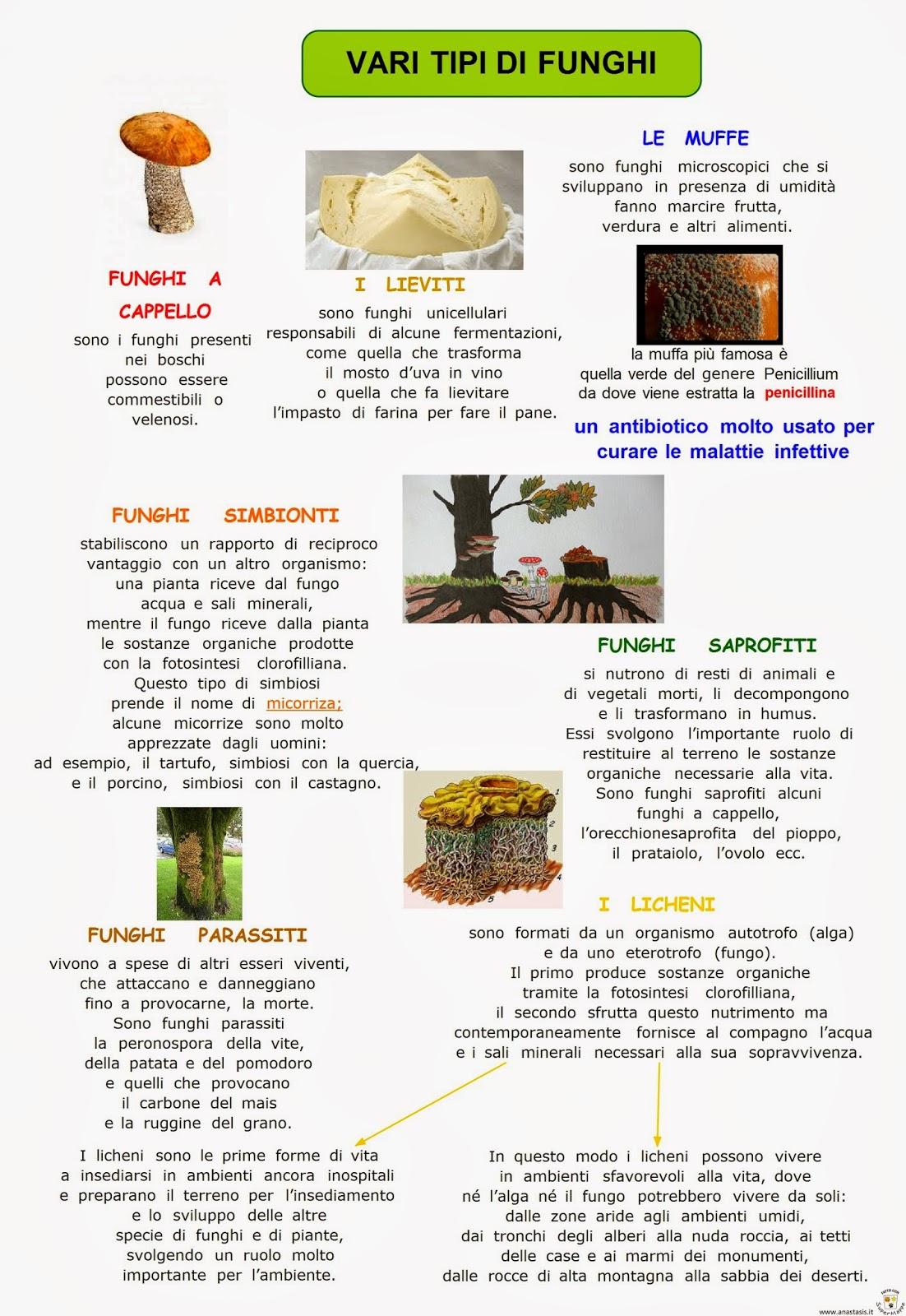 Paradiso delle mappe vari tipi di funghi for Tipi di case