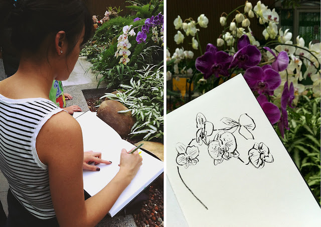 sketching orchids in greenhouse
