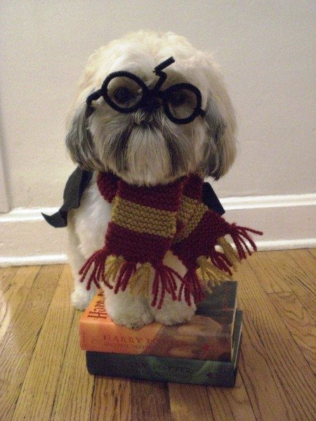 Harry Pupper, Harry Potter, dog