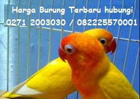http://cektagihan.blogspot.com/search/label/cek%20HARGA%20BURUNG