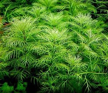النباتات البحرية