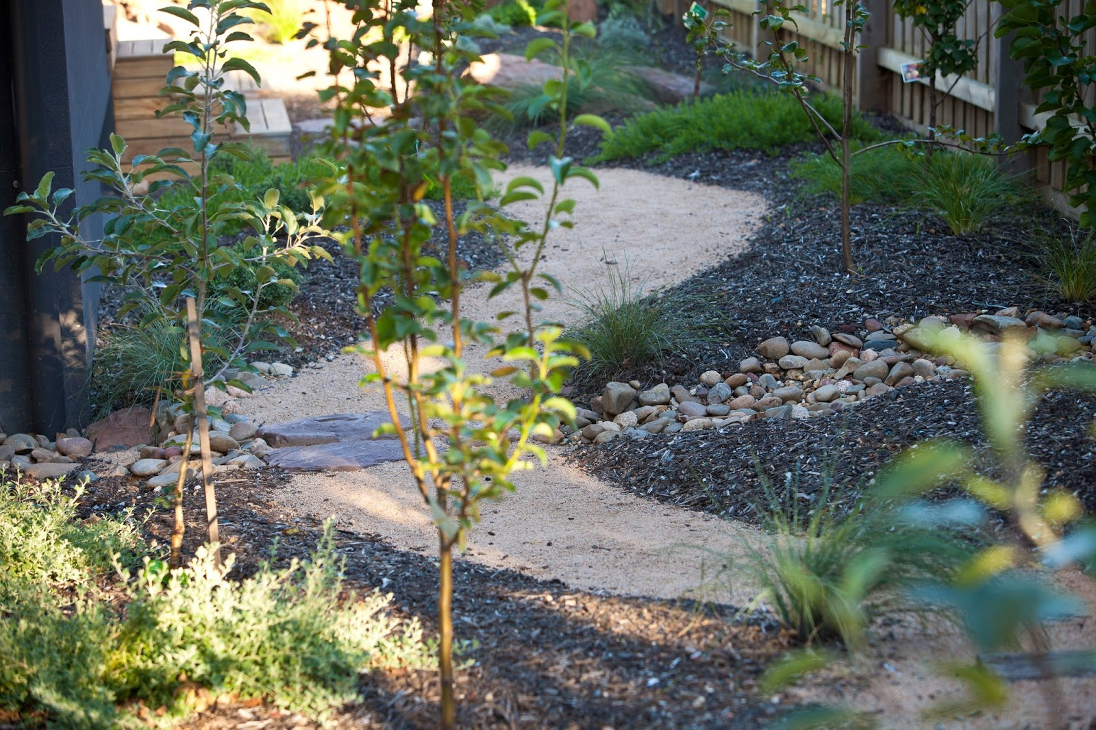 Phillip johnson landscapes save water this spring for Low maintenance drought tolerant plants